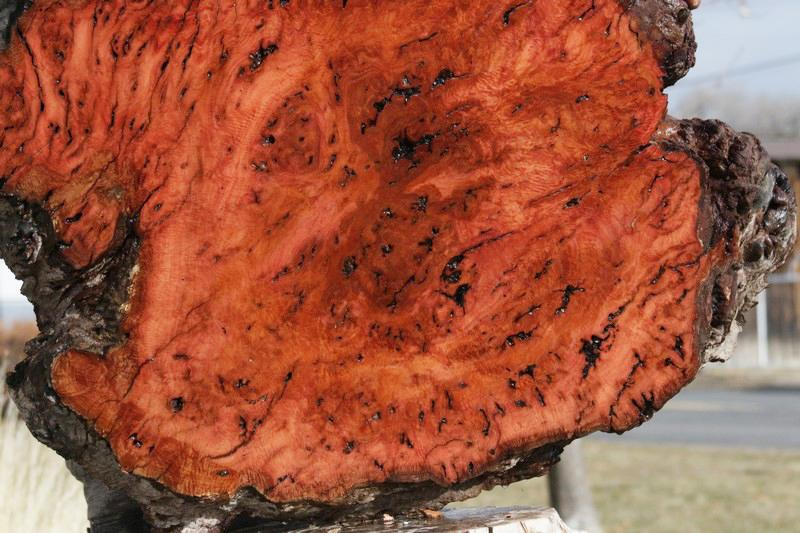 Red River Gum Burl Round Slab