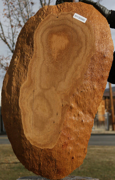 Exhibition Gold Mallee Burl Round Slab