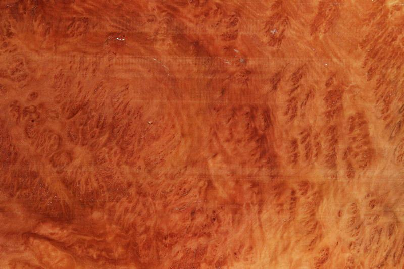Red Mallee Burl Slice