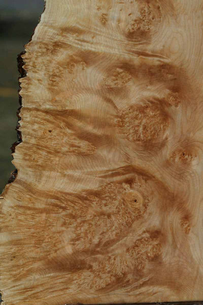 Figured Maple Burl Live Edge Lumber