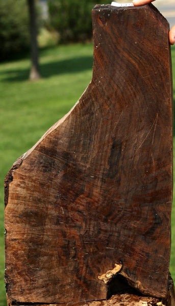 Museum Grade English Walnut