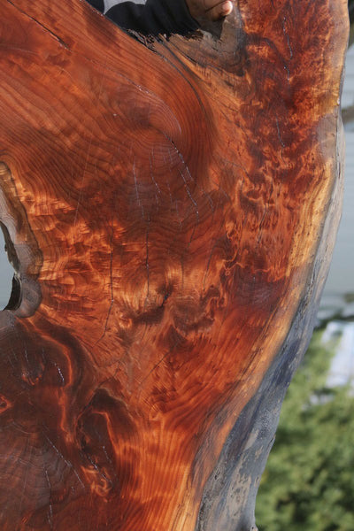 Rustic Figured Redwood Dinosaur Head Slab
