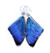 Butterfly Wing Earrings- Blue Morpho Adonis