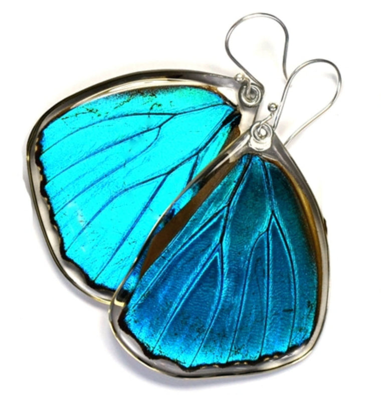 Butterfly Wing Earrings- Blue Morpho Menelaus - Wanderlust + Wildhearts