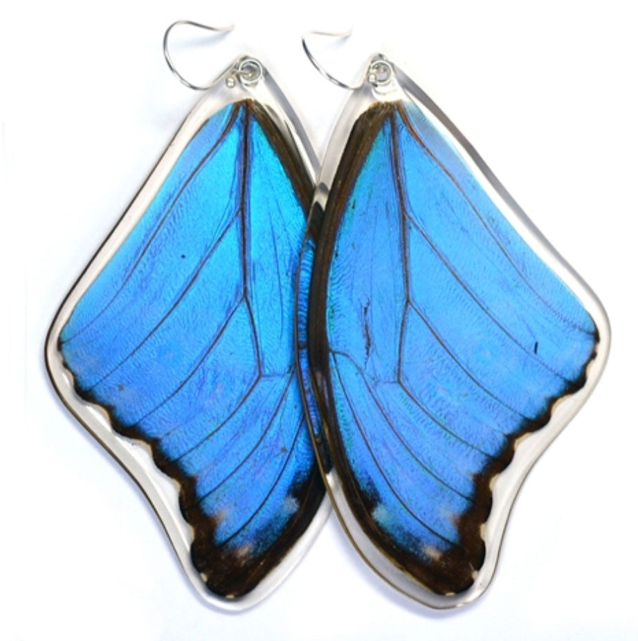 Butterfly Wing Earrings- Giant Blue Morpho - Wanderlust + Wildhearts