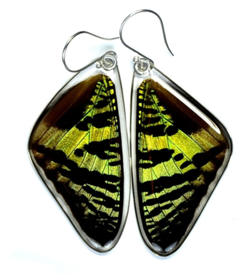 Butterfly Wing Earrings- Sunset Moth Top Wing - Wanderlust + Wildhearts