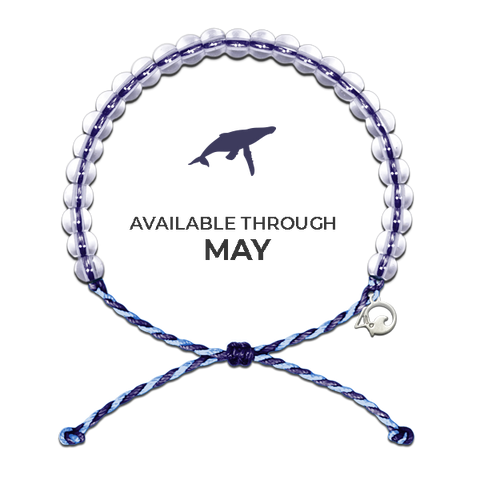 4ocean Whale and Dolphin Conservation - Limited Edition