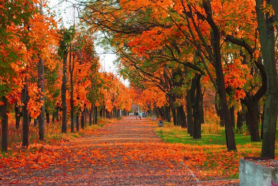 A city park in autumn with bright orange fall leaves