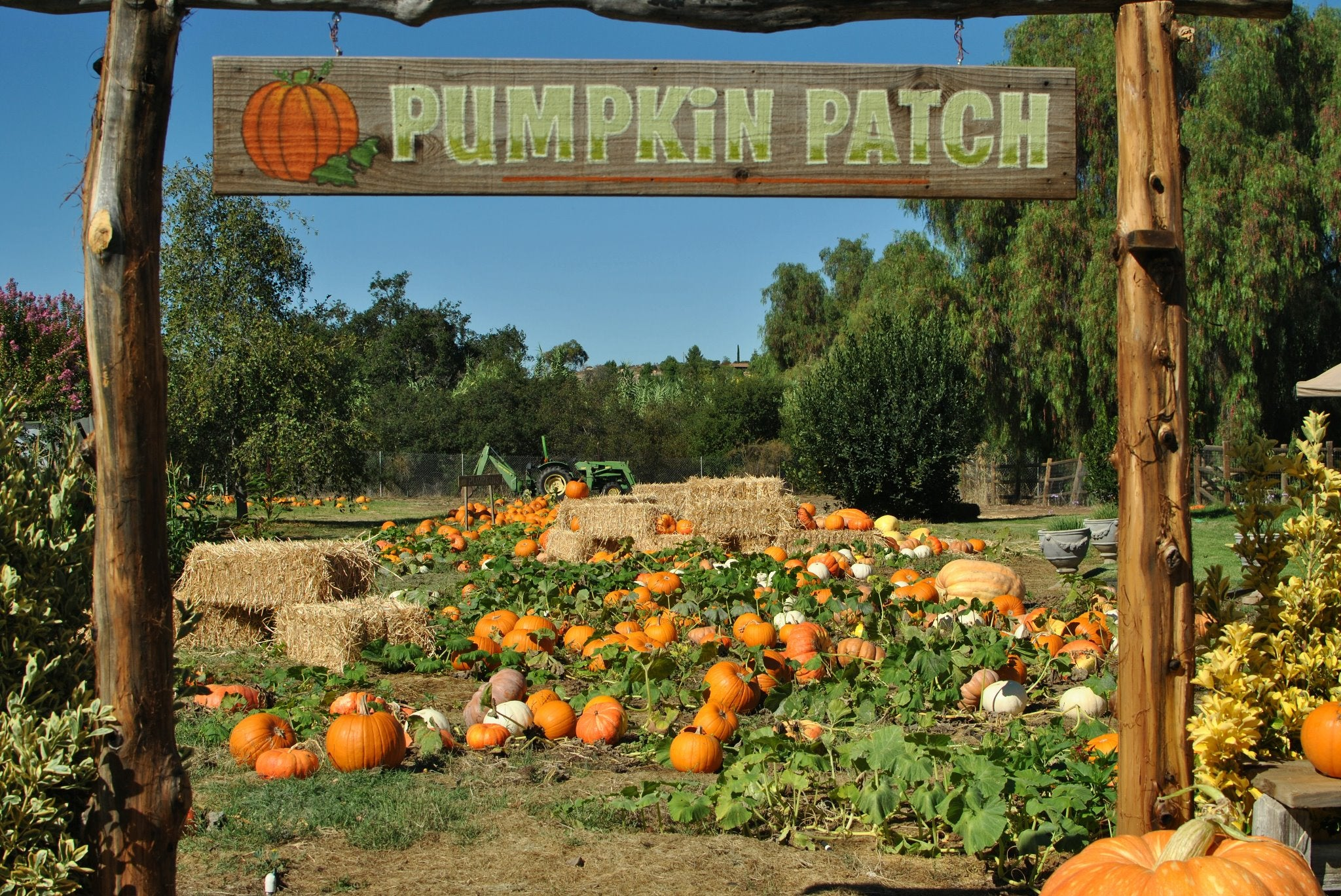 Pumpkin patch with a tractor and hay bales