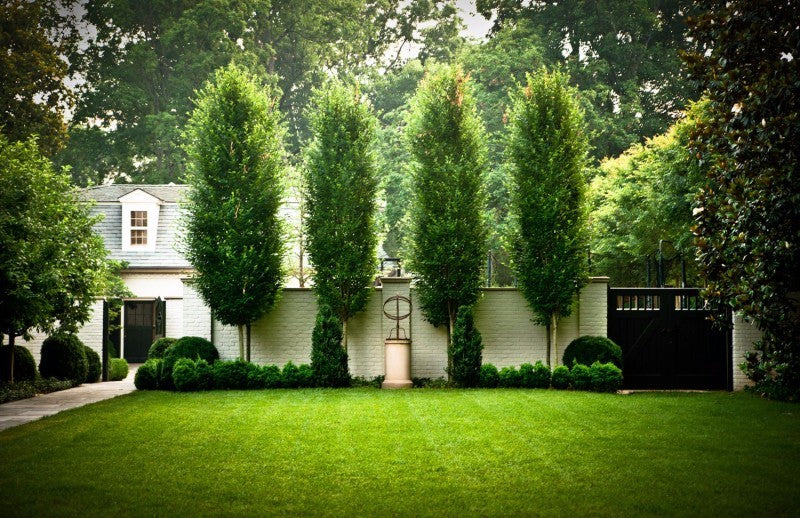 Lawn edged with brick fence and sculpted hedges