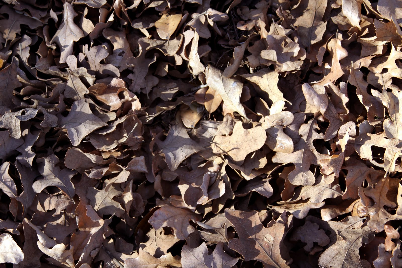 dry fall leaves covering the ground