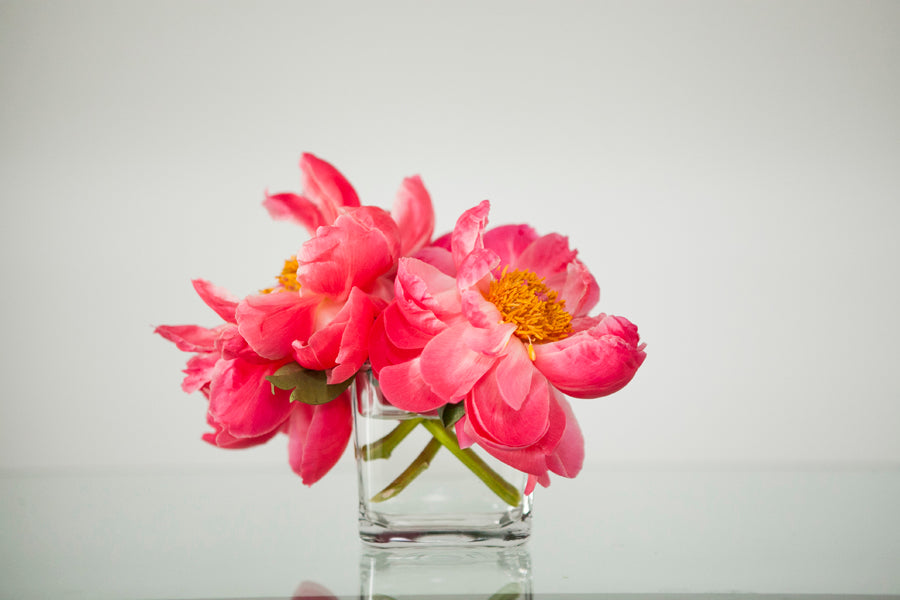 Three large bright pink blooms in a small square vase