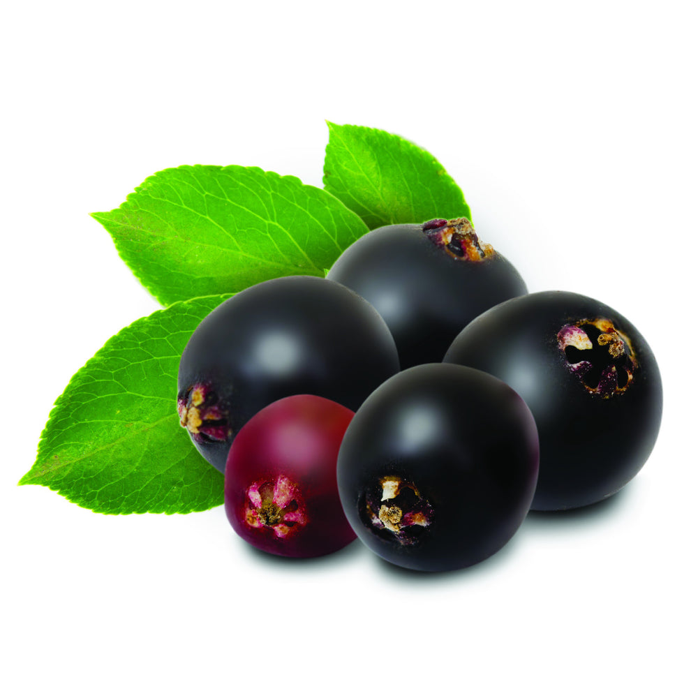 Elderberry ( e liquid | 100ml )