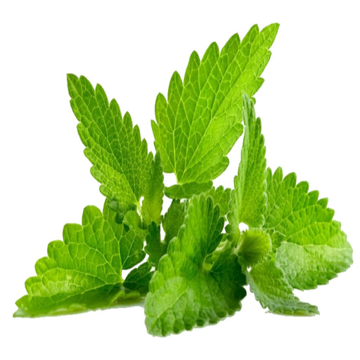 Spearmint ( e liquid | 100ml )