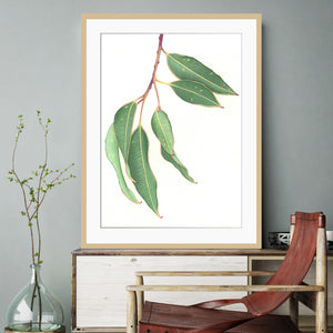 """Gum Leaves"" - fine art giclee paper print"