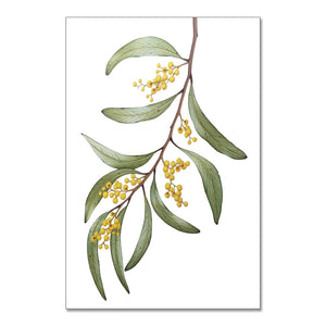 """Wattle Blossom"" - A3 framed original illustration"