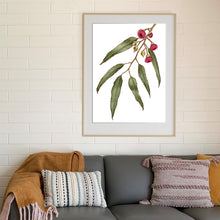 "Load image into Gallery viewer, ""Pink Flowering Gum"" - fine art giclee paper print"