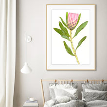 "Load image into Gallery viewer, ""Protea"" - fine art giclee paper print"
