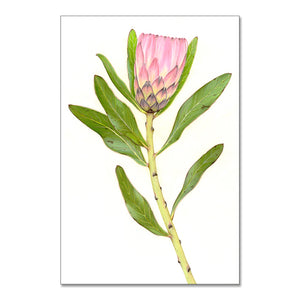 """Protea"" - A3 framed original illustration"
