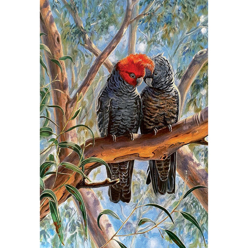 EB14 Lovebirds (Australian Gang Gang Cockatoos)