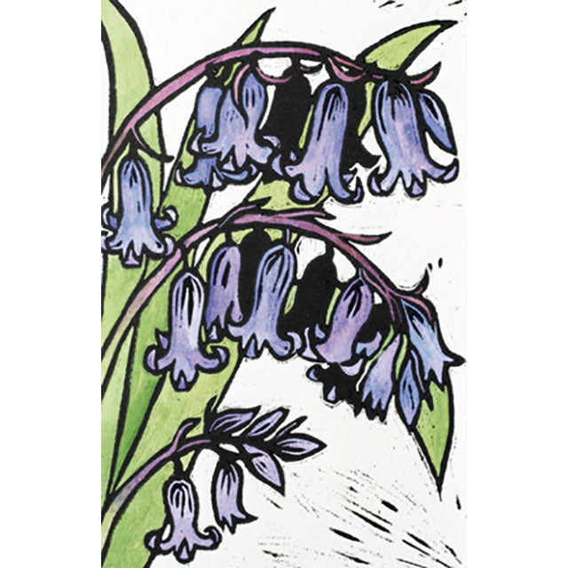 GP-KG06N English Bluebells