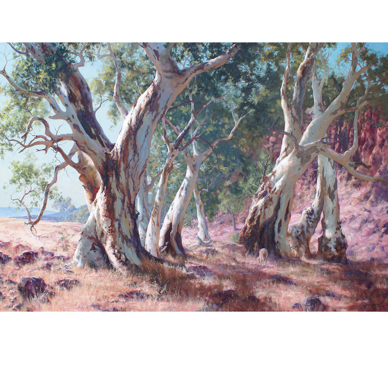 JCD35 A Family Of Gums, Flinders Ranges, SA
