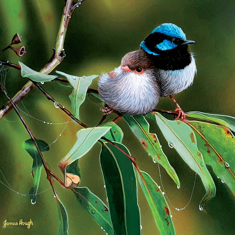 JMH01LS Affection (Superb Fairy Wrens)