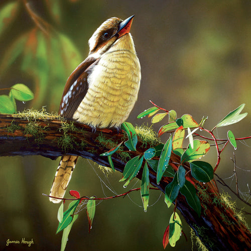 JMH02LS Times Like This (Australian Laughing Kookaburra)