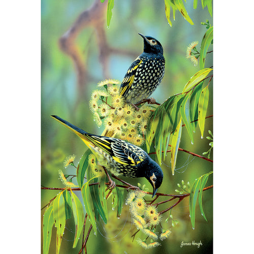 JMH06 The Remnants (Endangered Australian Regent Honeyeaters)