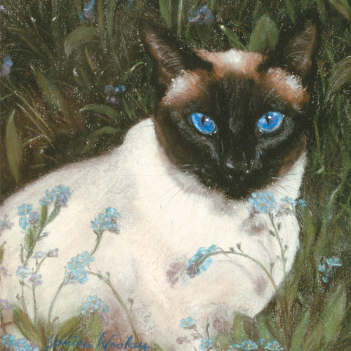 JW01G Siamese Cat