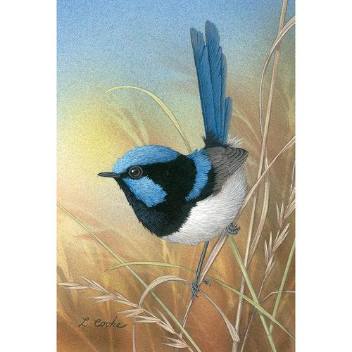 LC08 Superb Blue Wren