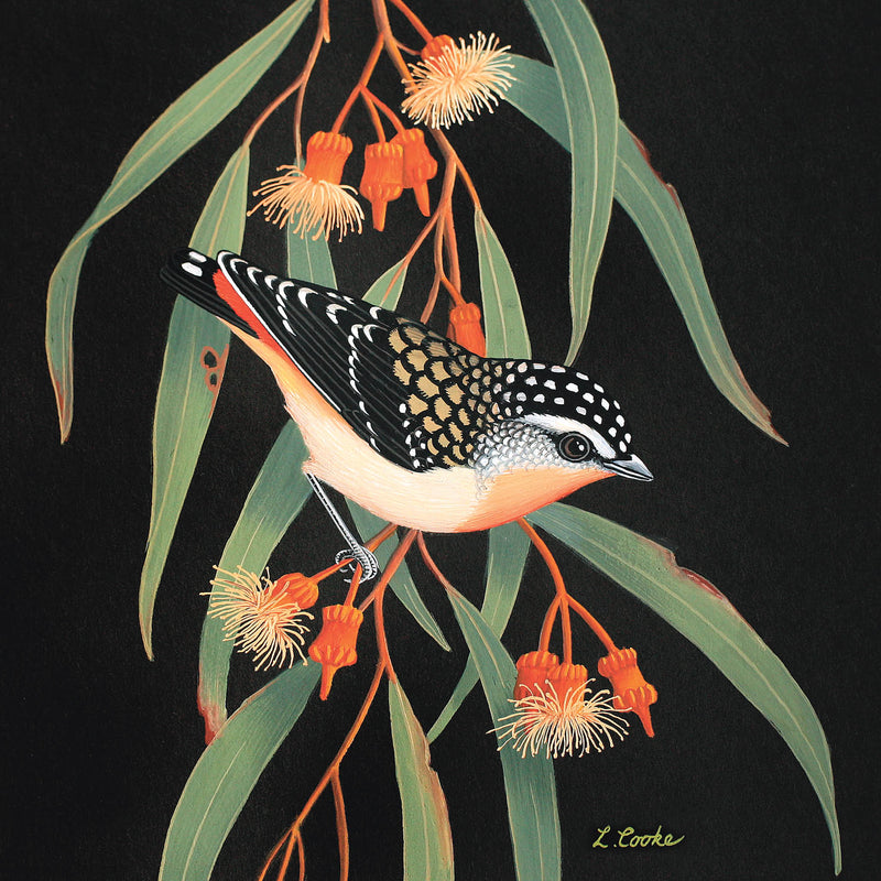 LC26G Australian Spotted Pardalote On Eucalyptus Blossom