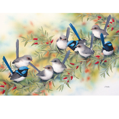 LC29 Superb Blue Wrens On Swan River Pea