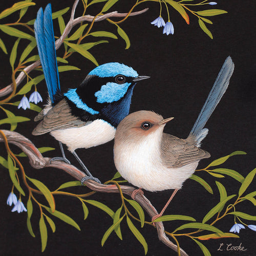 LC32G Australian Superb Blue Wrens And Bluebell Creeper
