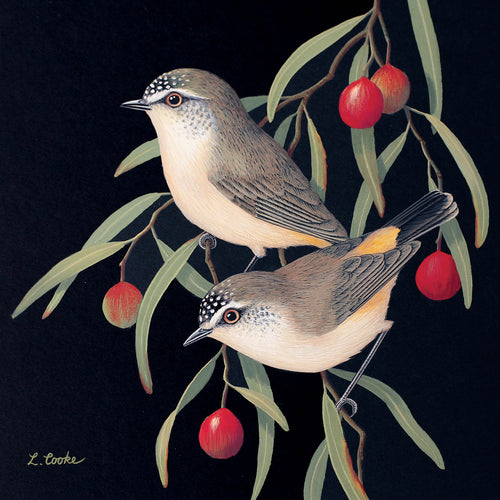 LC33G Australian Yellow-Rumped Thornbills And Quandong