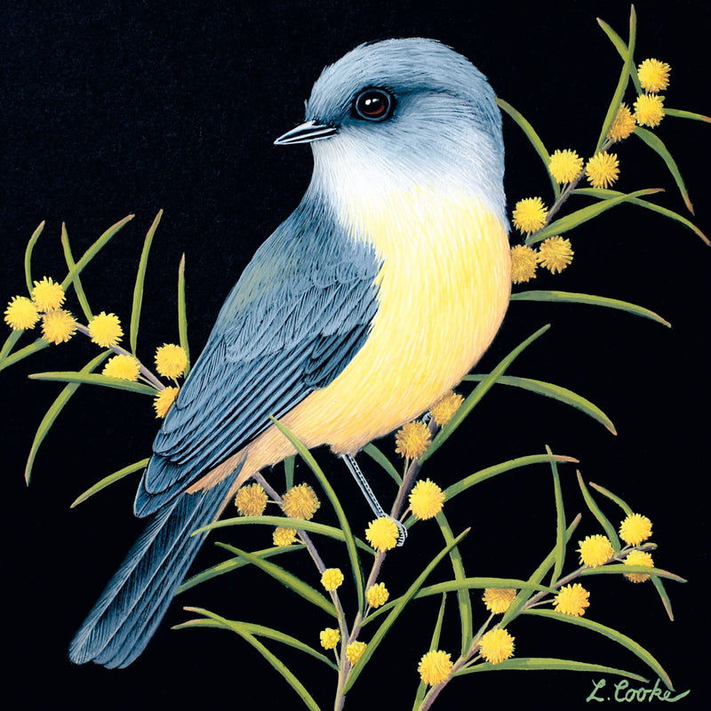 LC34G Australian Eastern Yellow Robin And Wattle Blossom