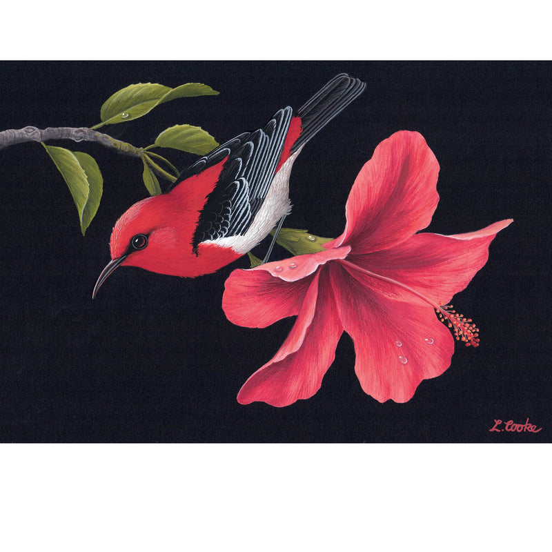 LC37 Australian Scarlet Honeyeater On Hibiscus Flower