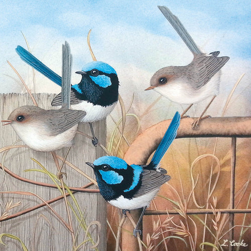 LC43G Seven Little Australians (Superb Blue Wrens)