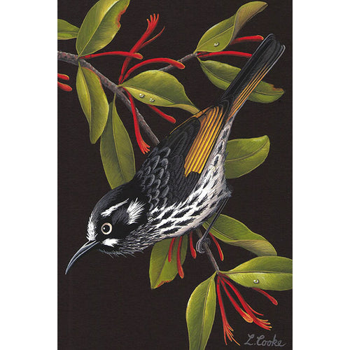 LC49 Australian New Holland Honeyeater, Mistletoe