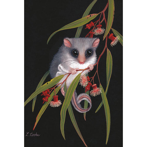 LC51 Australian Feathertail Glider, Coral Eucalyptus Blossom