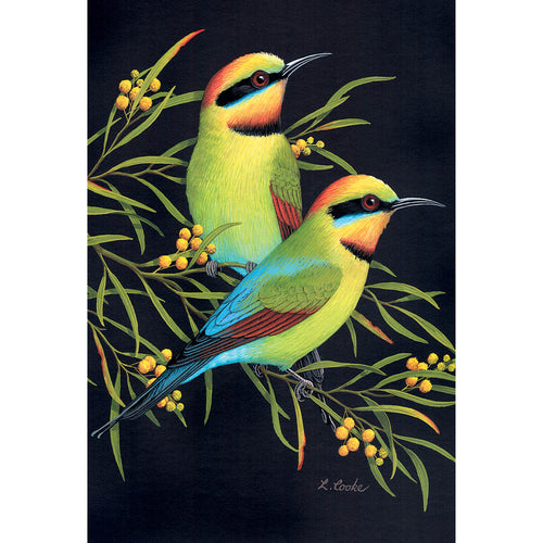 LC61 Australian Rainbow Bee-eaters And Wattle