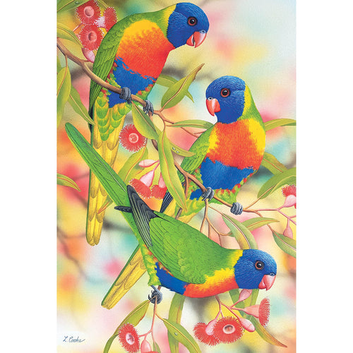 LC63 Australian Rainbow Lorikeets And Flowering Eucalyptus