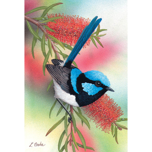 LC64 Superb Blue Wren On Scarlet Bottlebrush