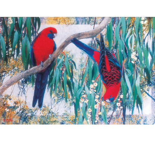 PA19 Australian Crimson Rosellas And Gum Blossom
