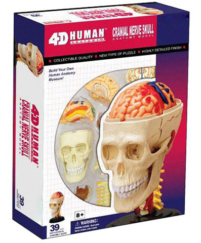 Human Body Life Size 3D Biology Toy