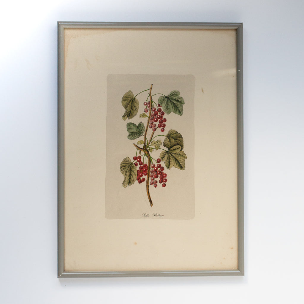 Framed Red Currants Watercolor