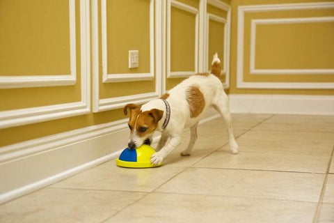 CaniSpin - The INSIDE toy for dogs!