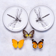 Dragonfly Cup & Saucer - schmoo.shop