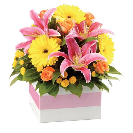 Funky - MIXED ARRANGEMENT (large box)