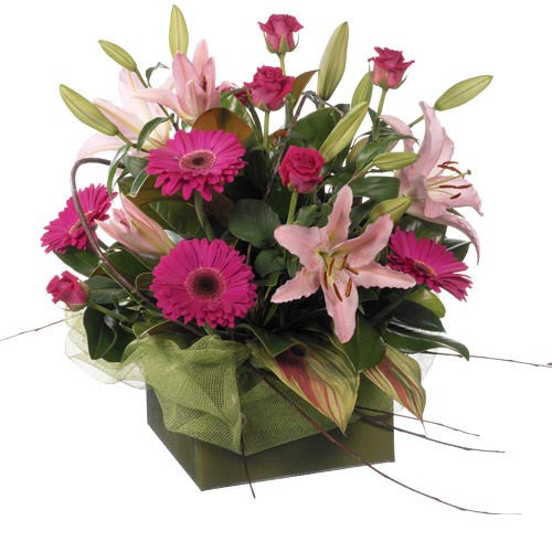 Contessa - MIXED ARRANGEMENT - (large box)